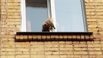 Несколько часов кот провисел в открытом окне.