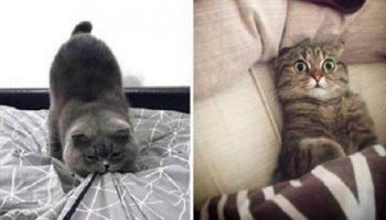 Улетные фото, которые отображают всю суть характера котов