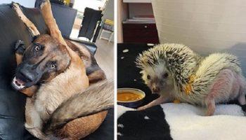 Эти фото животных, заставят вас смеяться