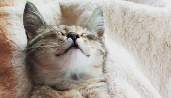 Бездомная кошка сутки просидела в подъезде