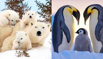 Невероятные семейные портреты животных в дикой природе!