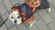 Девушка выкупила испуганную собачку у бомжей и приютила у себя