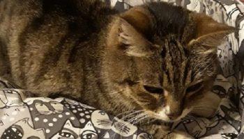 Кошку выбросили на улицу и спустя несколько дней она плакала от отчаяния у чужого дома