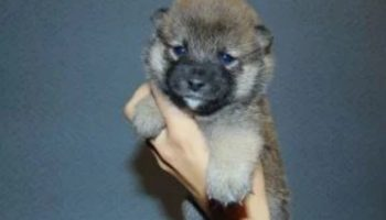 Мужчина приютил милого щеночка, но из него выросла совсем не собака