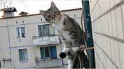 Каждый вечер ко мне спускался соседский кот и выслушивал меня. Но, однажды, он решил утешить меня по-настоящему!