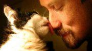 «Кота заводят, чтобы…»: стих, посвященный всем котам и их хозяевам