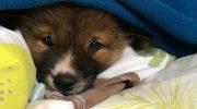 Прямо с неба во двор обычной семьи упал необычный щенок