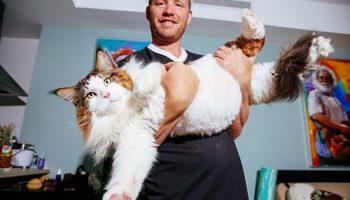 Такого огромного кота вы в жизни не видели