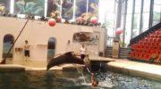 Жизнь дельфиненка в Болгарском дельфинарии оборвалась от переутомления прямо во время шоу