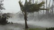 Женщина во время урагана на Багамских островах спрятала у себя дома почти сто собак