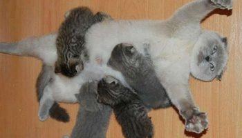 Мамочки кошки, которые явно гордятся своими котятами