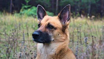 Девушка Альбина взяла пса на передержку, но оставила навсегда
