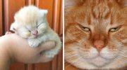 Фото доказывающие, что коты растут ну очень быстро…
