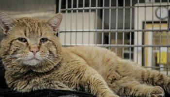 Бездомный рыжий кот по кличке Клэнкси очутился в приюте и… вдруг заговорил с людьми!