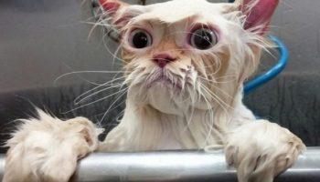 Целый месяц пилила дочку, чтобы она помыла кота