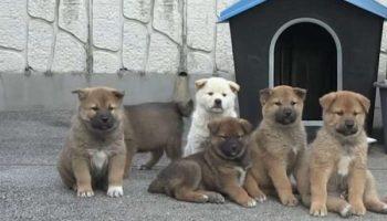 Собака со своими крохотными щенками пришла в дом к незнакомцу. Мужчина был в растерянности