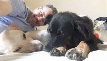 Бразильский пастырь во время службы пристраивает бездомных собак