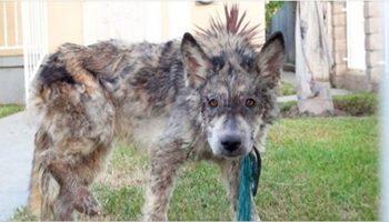 Волонтеры не знали, кто это «чудовище», но они не бросили животное в беде