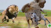 «Лапа помощи» — как животные спасают друг друга. Несколько случаем заснятых на камеру.(GIF)