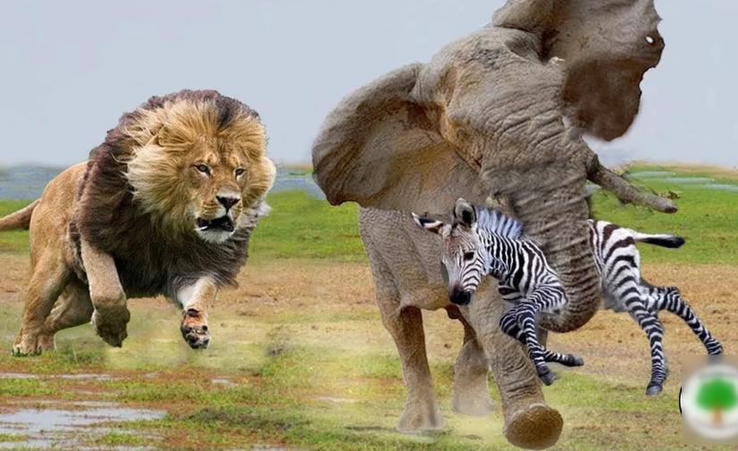 картинка как животные помогают друг другу подробностей будущем