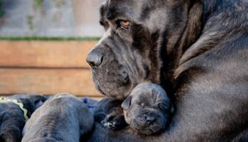 Собаки, которые знают, что такое семья!