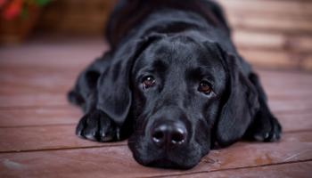 10 самых умных пород собак, которых легко дрессировать