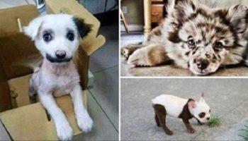 20 самых красивых собак, которых природа одарила интересным окрасом