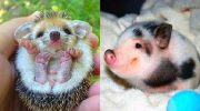 Фото забавных животных, которые поднимут Вам настроение!