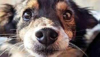 Хозяева бросили пса на привязи, он дрожал от холода. В тот вечер намело много снега, и грянули морозы