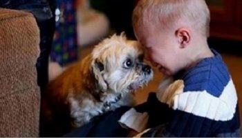 Фотографии, доказывающее, что все дети должны иметь животных