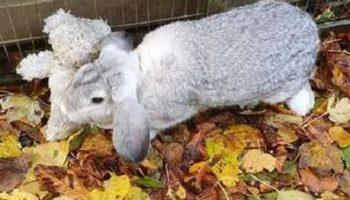 Испуганный кролик ни за что не хотел расставаться с мягкой игрушкой
