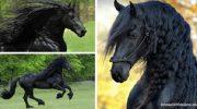 Фредерик Великий — самый красивый конь в мире