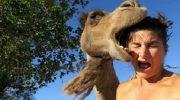 15 смешных стоп-кадров с животными. Забавные моменты!