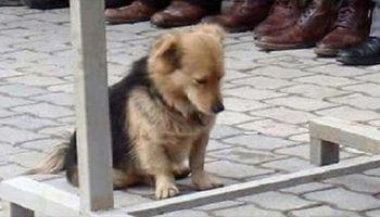 Мужчина заметил, что его пес куда-то отлучается по утрам, когда он понял, куда — сердце его было разбито!