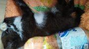 Больной бездомный котенок не мог открыть глаза