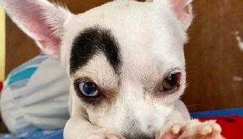 Уникальный пес Лаки с оригинальной внешностью