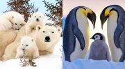 Семейные фото животных в дикой природе!