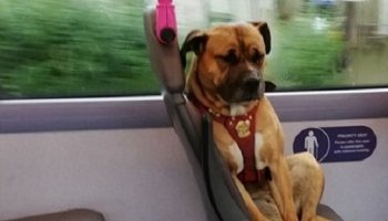 Одинокий пес в автобусе растрогал жителей Англии