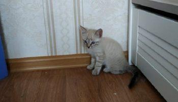 Девушка принесла домой котенка, рассчитывая, что старшая кошка его примет, но та прогнала кроху прочь!