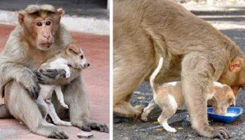 Обезьяна «усыновила» щеночка и воспитывает его, как настоящая мама