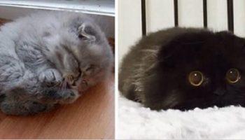 Фото самых красивых и милых котят!