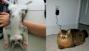 Коты — уникальные создания! Они украсят любой дом!