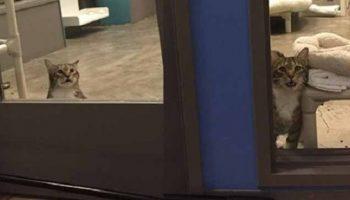 Один из приютов для животных опубликовал слезную просьбу помочь совладать с котом-рецидивистом