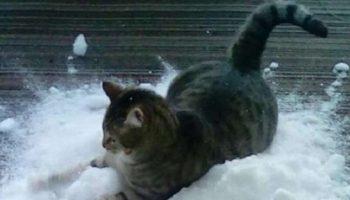 Этот котик обожает снег больше, чем валерьянку!