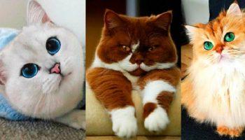 Любите котиков? Фото самых очаровательных котиков