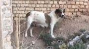 Приятели заметили у дороги лающую собаку. Она просила спасти своего щенка