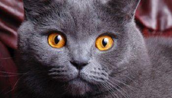 Кошка является высокотехнологичным датчиком благополучия