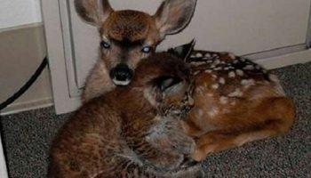 Джордж спас из лесного пожара маленькую рысь и олененка. Это изменило всю его жизнь!