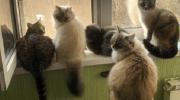 Коты солистки группы «Мираж» Натальи Гулькиной становятся звездами Инстаграмм