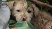 Маленький щенок находился на грязной свалке под дождем и сильно дрожал от сырости и холода